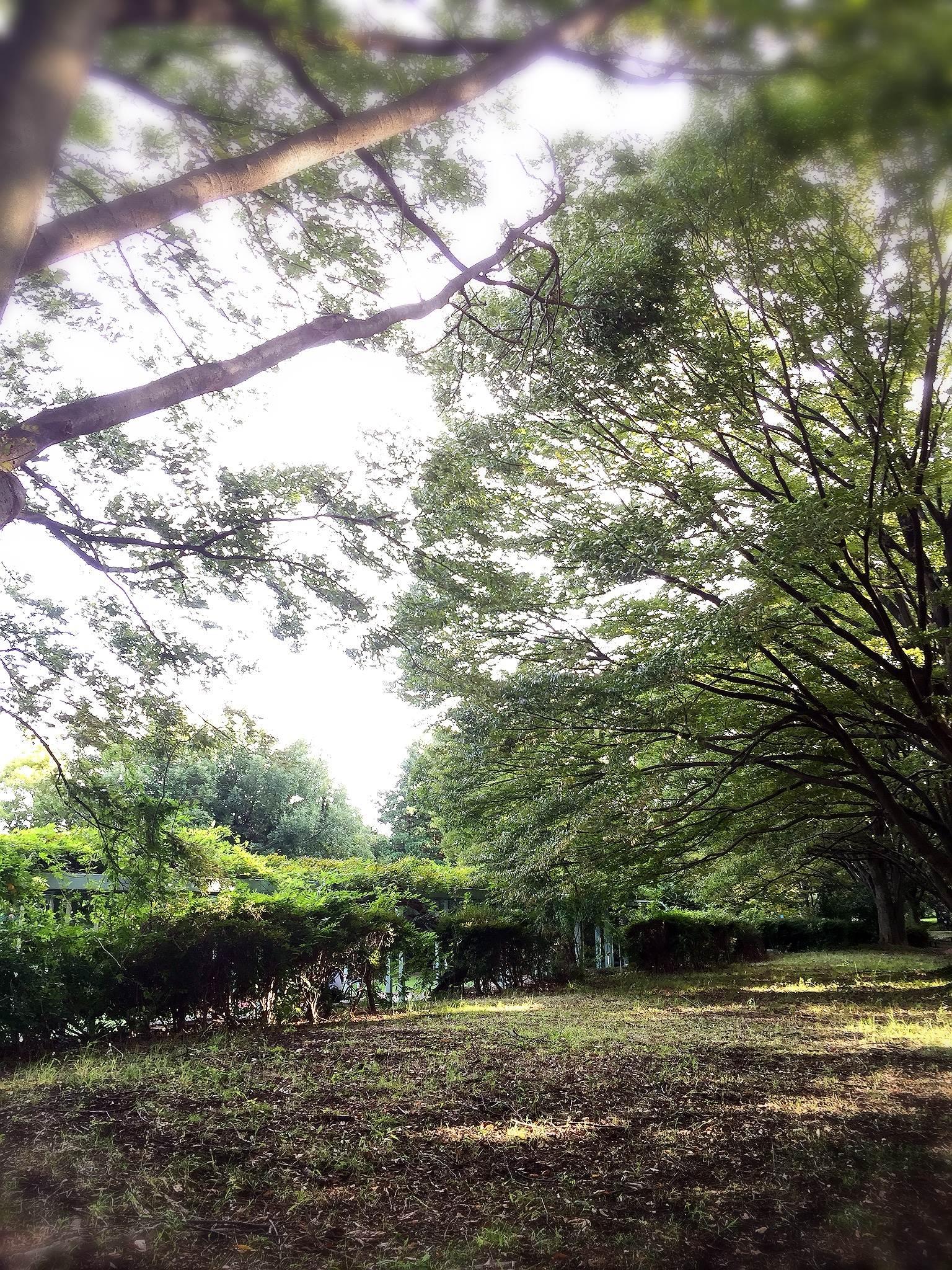 菖蒲公園-1